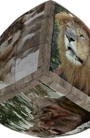 V Cube breinbreker 3 Wild Animals 5 cm
