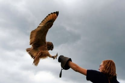 Workshop: Vliegen met uilen